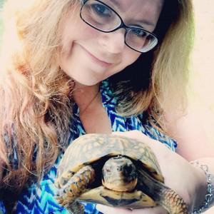 Roadside turtle rescue